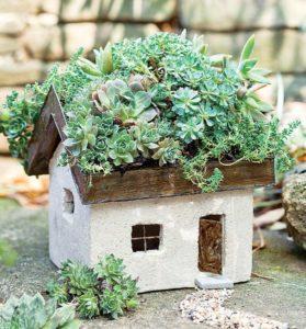 chalet succulente mini jardin