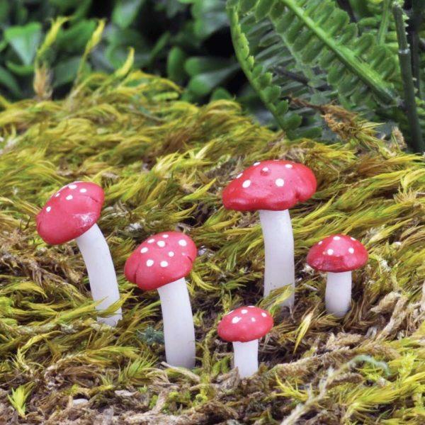 Micro Champignons pour terrarium